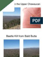 Rotary Beetle Kill