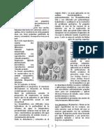 Foraminiferos 2.1
