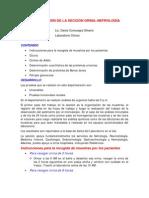 Organizacion de La Seccion Orina-nefrologia