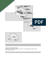 AFASIAS_ubicacion_y_etiologia[1]