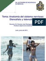 Diencefalo y telencefalo 2011