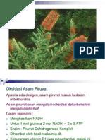 2-ok-piruvat-glikogen-pdf