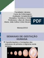 SEMANAS DE GESTAÇÃO HUMANA