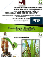 Evaluacion de Nematodos Entomopatogenos Para El Control de Salivazo