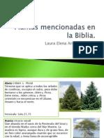 Plantas Mencionadas en La Biblia