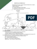 Hemostaza-si-fibrinoliza