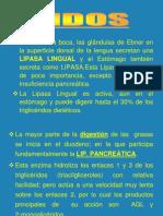 2  DIGESTIN DE LPIDOS