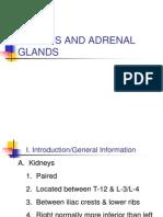 BIOL226Lec10 Kidney,Adrenal