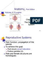 Ch28 Reproductive System