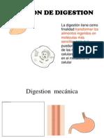 Funcion de Digestion