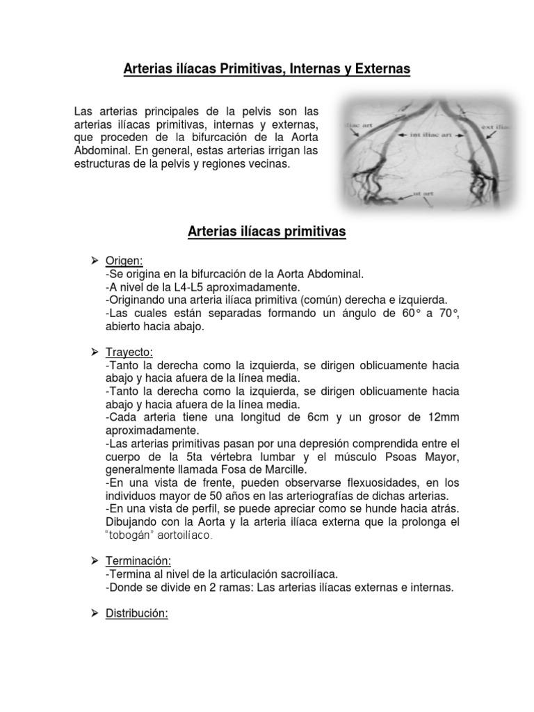 RESUMEN Arterias ilíacas Primitivas