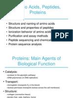 Gülüzar_Özbolat_ Aminoacid, Peptides, Protein