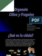BIOLOGIA_Centriolos
