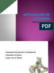 articulaciondelacadera-110817201519-phpapp02