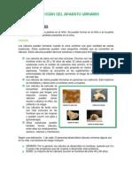 PATOLOGÍAS DEL APARATO URINARIO