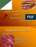 Sistema Muscular Y Respuesta Motora
