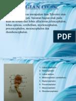 Presentation Ichtyology
