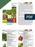 Guía Básica para la Agricultura Orgánica Urbana
