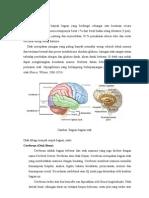 Anatomi Otak Dan Nervus