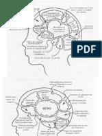 Cerebro Feminino e Masculino
