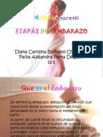 Etapas Del Embarazo 11-2