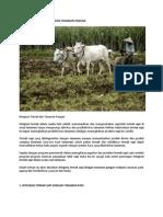 Integrasi Ternak Sapi Dengan Tanaman