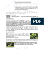 RESERVA ECOLÓGICA DE MACHE CHINDUL-COTACACHI-CAYAPA-CAYAPAS-MATAJE