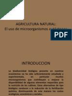 Agricultura Natural y El Uso de Microorganismos