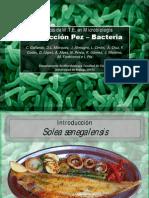 Vibrio harveyi, una amenaza para las piscifactorías del sur de la Península Ibérica