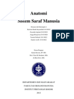 Anatomi Sitem Saraf Manusia