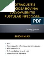 IBR (2)