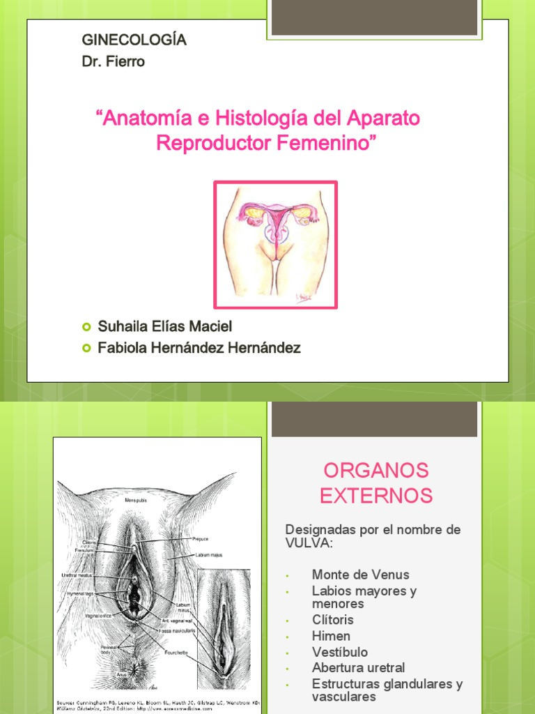 Gine Anatomia Internado