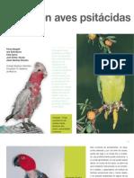Av17 Picaje en Aves Psitácidas