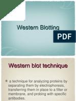 Western Blotting Micrsoft
