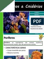 III 1porferosecelenterados 110814211915 Phpapp02