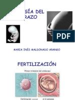 Fisio Log i Adele Mba Razo