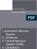 Terminology Nervous System