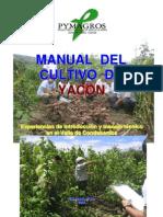Yacon Cultivo Experiencia Valle Condebamba