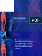 MUSCULO CARDIACO 3