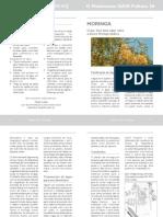 Folheto 26p Moringa