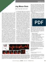 Nanoscopy in a Living Mouse