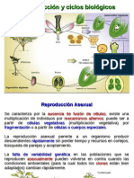 Reproduccion y Ciclos Biologicos