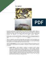 Creşterea peştilor răpitori (rase de pesti)