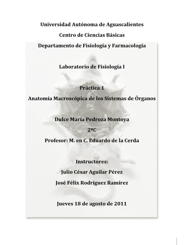 Dorable Ejercicio 15 Anatomía Macroscópica Del Sistema Muscular ...