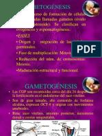 5.-GAMETOGENESIS.OVOGENESIS