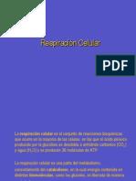 Respiración+Celular