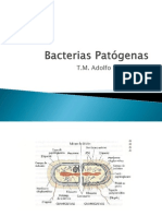 05 Bacterias patógenas I Staphylo, Strepto, Acinetobacter