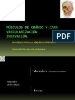 Musculos de Craneo y Cara Modificada