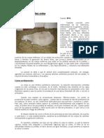 Toxemia de la preñez (cetosis ovina)