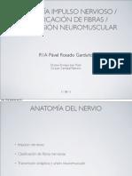 Fisiologia Impulso Nervioso